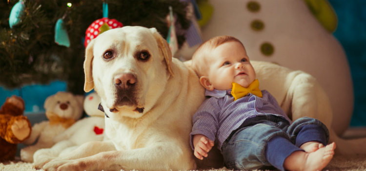 recém-nascidos e animais