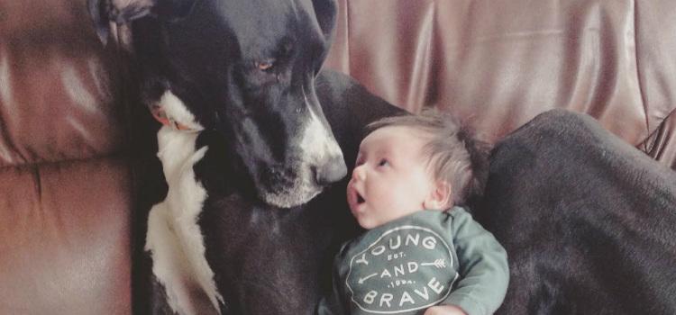 cachorro fortalece imunidade